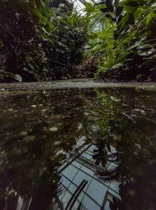 Zielone rośliny i ich odbicie w wodzie w szklarni opolskiego zoo